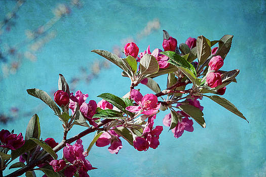 Springtime Crabapple Flowers by Mary Lee Dereske