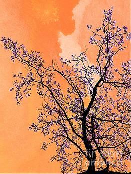 Springtime by Daniela White