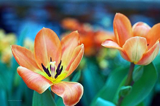 Springtime by Edward Congdon