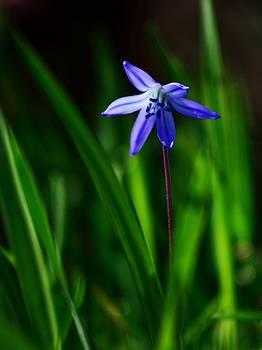 Springtime flower by Peder Lundkvist