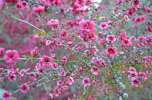 Tommi Trudeau - Springtime Flowers