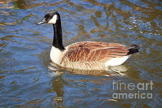 Springtime Goose by Elizabeth Dow