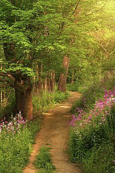 Springtime Hike by Rob Blair