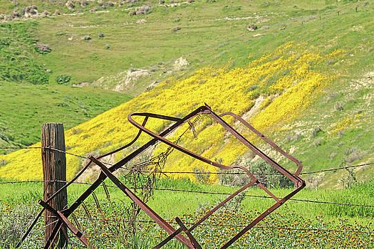 Art Block Collections - Springtime in California
