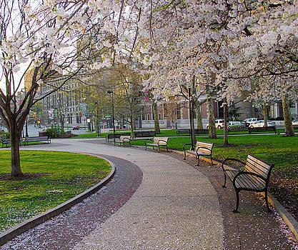 Springtime in Philadelphia by Bill Cannon