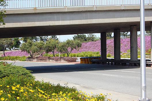 Springtime in Santa Clara by Carolyn Donnell