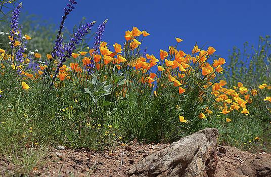 Cliff Wassmann - Springtime in Southern California