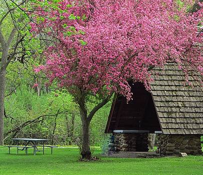 Springtime in the Park by Lori Frisch