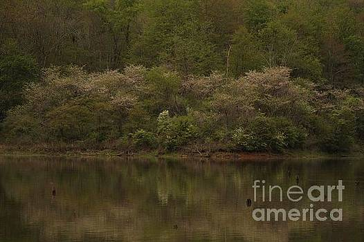 Springtime Lake  by Jamie Kerns