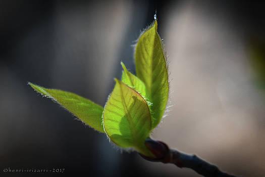 Springtime Leaves by Henri Irizarri