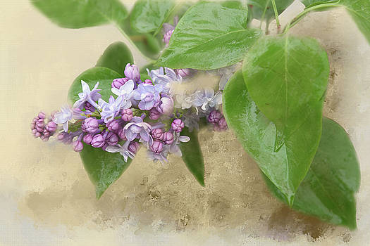 Springtime Lilacs by Lee Fortier