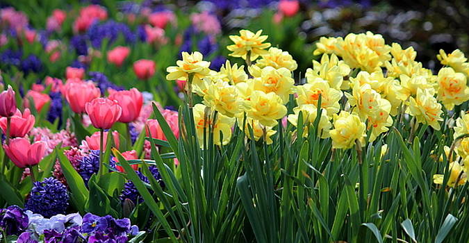 Rosanne Jordan - Springtime Magic
