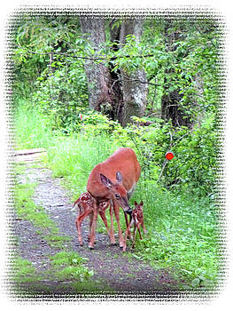 Springtime Moment - Whitetail Deer And Fawns by Patricia Keller