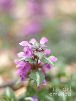 Springtime Nettles 2 by Dorothy Lee