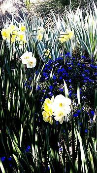 Nikki Dalton - Springtime