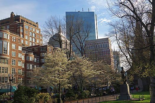 Toby McGuire - Springtime on Boston Public Garden Boston MA