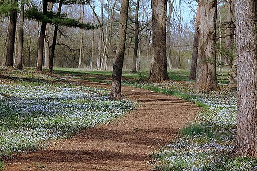 Rosanne Jordan - Springtime Path of Wildlfowers
