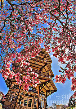 Springtime Patterson Park Pagoda by SCB Captures