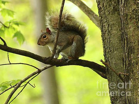 Springtime Squirrel by Dorothy Lee
