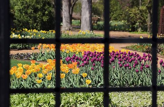 Rosanne Jordan - Springtime Through the Window
