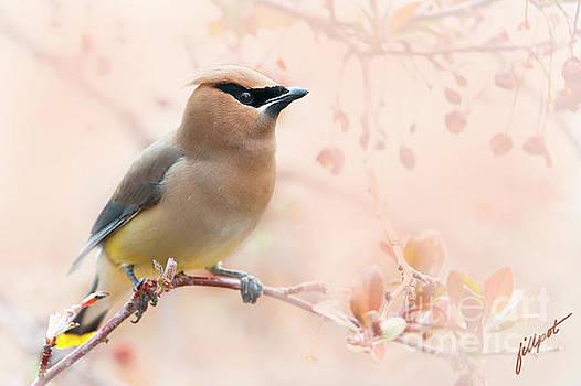 Springtime Traveler by Jim Fillpot