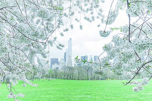 Springtime by Vivienne Gucwa