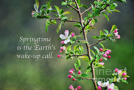 Springtime Wake-Up by Kerri Farley