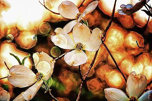 Springtime by Wesley Nesbitt