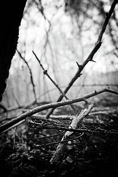 Springy by Off The Beaten Path Photography - Andrew Alexander