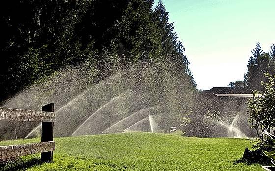 Sprinklers by Brian Sereda