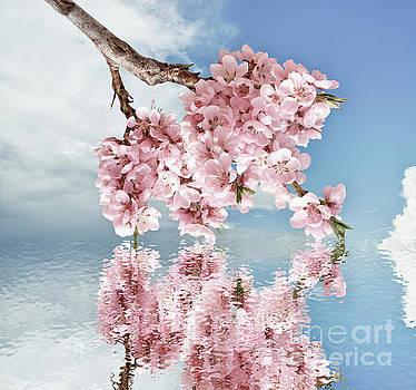 Springtime by Ma Bu
