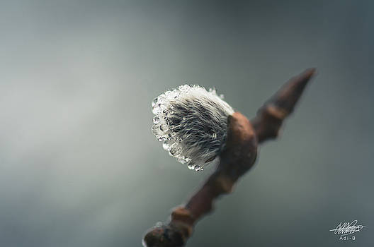 Sprouting by Adnan Bhatti