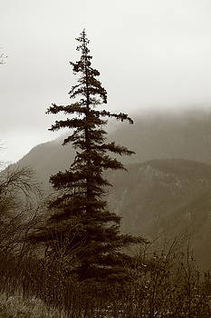 Spruce in the Rain Monochrome by Kimberly VanNostrand