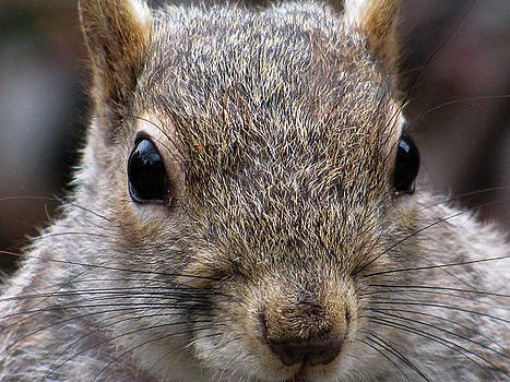 Squirrel - Extreme Close Up by Jake Danishevsky