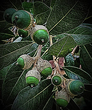 Squiggly Acorns by Bonnie Davidson