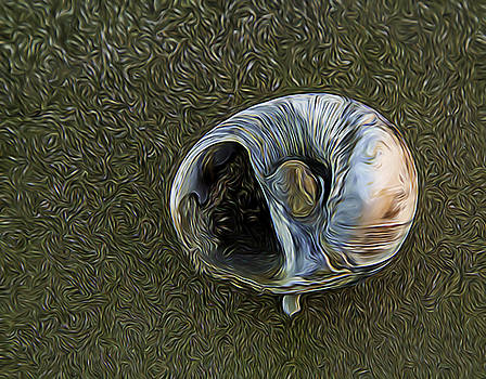 Bonnie Davidson - Squiggly Shell