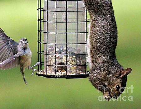 Paulette Thomas - Squirell and Bird Sharing