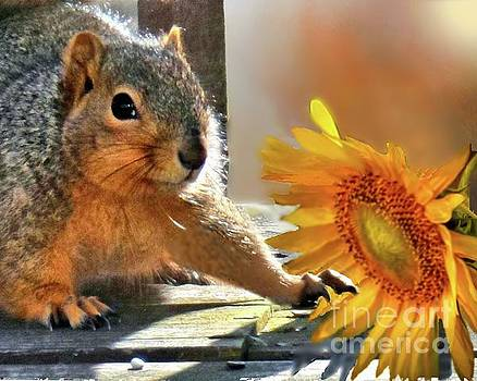 Squirrel and Sunflower by Janette Boyd