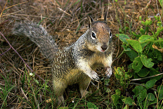 Squirrel at Moonstone Beach, California 001 by Lon Casler Bixby