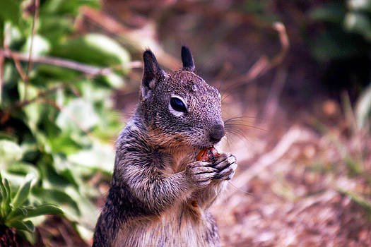 Squirrel at Moonstone Beach, California 003 by Lon Casler Bixby
