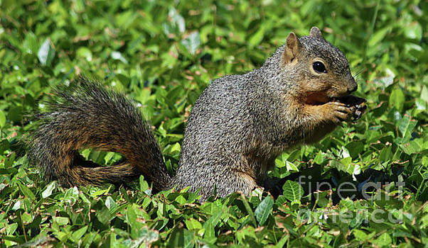 Squirrel by Inspirational Photo Creations Audrey Woods