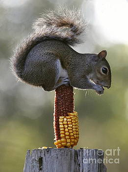Squirrel Buffet by Myrna Bradshaw