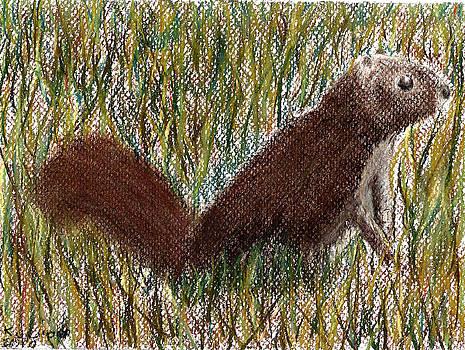 Squirrel by Danielle Nickerson
