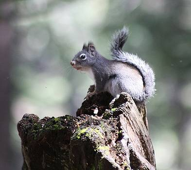Squirrel Delight by JoAnn Tavani