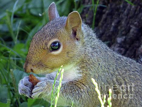 Squirrel Eating by Leara Nicole Morris-Clark