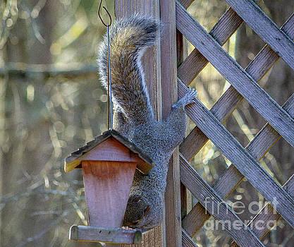 Squirrel Hanging Ten  by JW Hanley