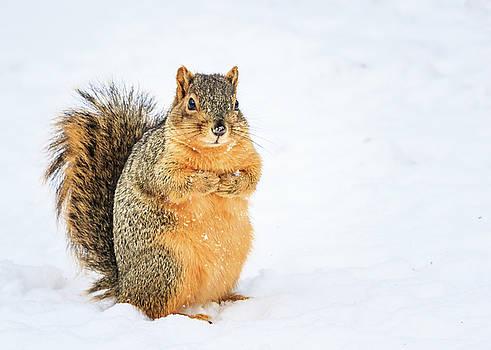 Squirrel in Snow by Joni Eskridge