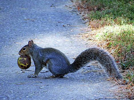 Squirrel  by Jamie Johnson