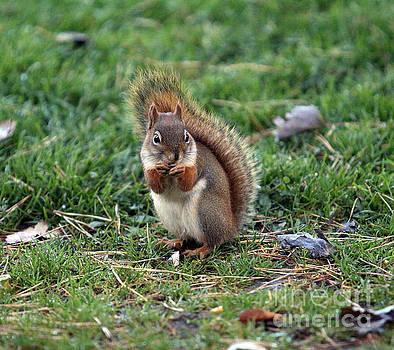 Squirrel by Kathy DesJardins