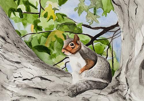 Squirrel by Marcella Morse
